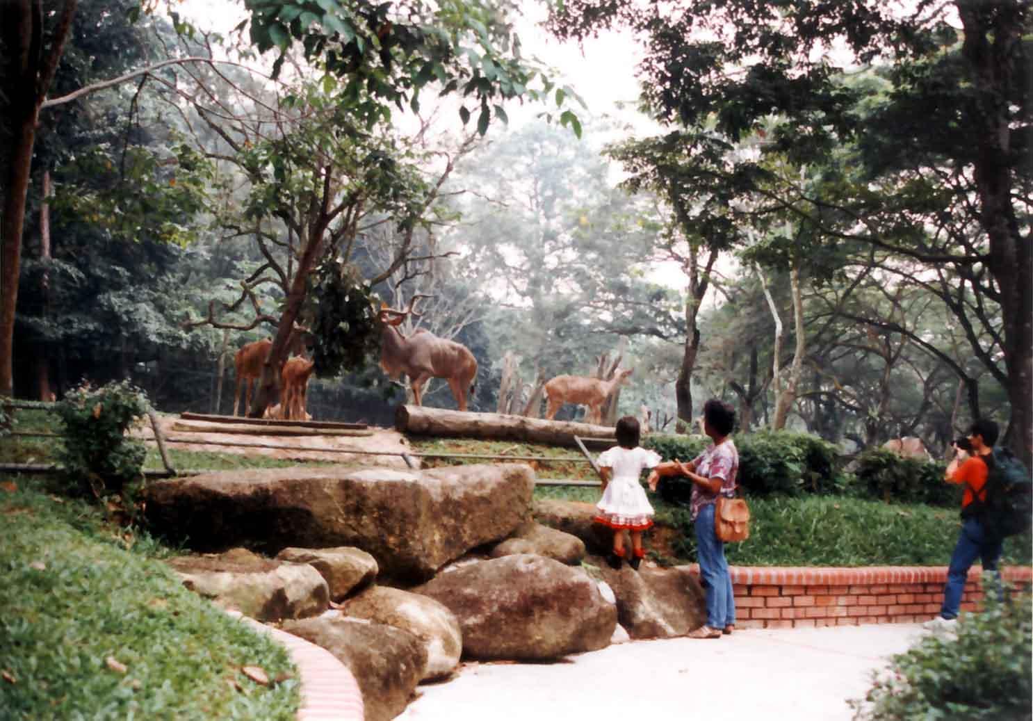 Dissertation On Zoo Design Exhibitry